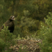 Wilde Überlebenskünstler - Wie Tiere bauen