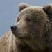 Wildnis Nordamerika - Die Macht der Berge