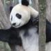Bilder zur Sendung: Mission Panda-Transport
