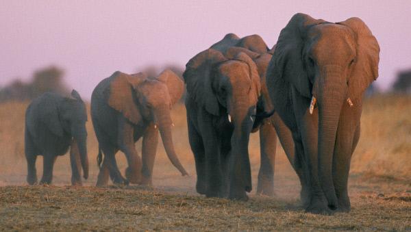 Bild 1 von 1: In der Tierwelt gibt es so manch ungew�hnliches Verhalten. Und die Partnersuche wird dadurch auch nicht immer erleichtert.