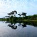 Brennpunkt Regenwald - Klimaschutz in Zentralafrika