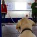 Partner mit Spürnase - Hunde im Einsatz für den Menschen