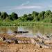 Das Pantanal