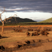 Zurück zur Wildnis - Das Madikwe Wildreservat in Südafrika