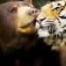 Bilder zur Sendung: Unglaubliche Tierfreundschaften