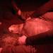 Im Nest der Meeresschildkröte