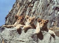 Drei Strolche in der Wildnis