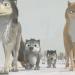 Alpha & Omega 7 - Der große Schneesturm