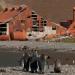 Insel der Pinguine