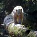 Bilder zur Sendung: Expeditionen ins Tierreich XXL