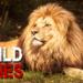 Bilder zur Sendung: Wild Ones - Wer ist König?