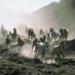 Bilder zur Sendung: All die sch�nen Pferde