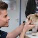 Tierarztgeschichten