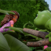 Bilder zur Sendung: Friends - Das Dschungel-Abenteuer