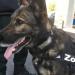 Partner mit Supernase - Hunde im Einsatz f?r den Menschen