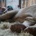 Bilder zur Sendung: Operation Wild - Tier�rzte in der Wildnis