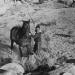Gewehre zum Apachen-Paß