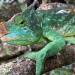 Unbekanntes Madagaskar