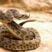 Bilder zur Sendung: Venom Hunters - Die Giftj�ger