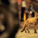 Bilder zur Sendung: Tiere im Fokus