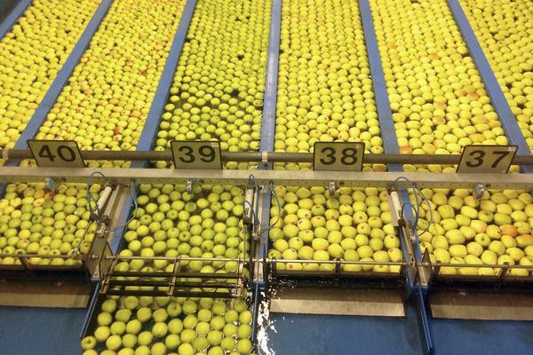 Bild 1 von 5: Apfelsortieranlage in einer Genossenschaft