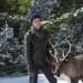Im Norden strahlt der Weihnachtsstern