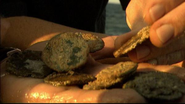 Bild 1 von 1: Silbermünzen vom Meeresboden mit den Spuren von 400 Jahren.
