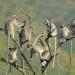 Naturparadies: Indien Die Letzten ihrer Art