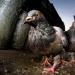 Bilder zur Sendung: Wildes London - Tiere im Großstadtdschungel