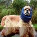 Bilder zur Sendung: Mein Hund, dein Hund