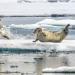 Auf Leben und Tod - Die Arktis