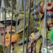 Die Puppenspieler von Catania