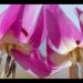 Geheimnisvolle Wildblumen