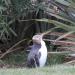 Ein Tag in der Wildnis - Überleben in Neuseeland