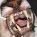 Bilder zur Sendung: Raubkatzen - Tödliche Angriffe