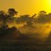 Der Jaguar - Unbekannter Dschungeljäger