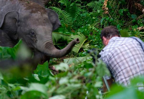 Chinas letzte Elefanten