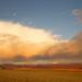 Tödliches Tempo - Wilde Wüste