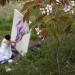 Kirschblütenfest in Japan