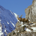 Die vier Alpen