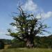 Ein Traum von Baum
