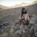 Herman, der Apache