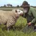 Tierische Typen - Günters Leben für die Tiere
