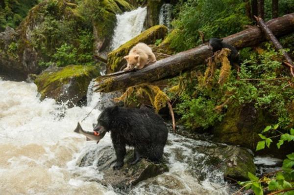 Mensch und Natur: Lebensraum Wildnis