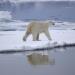 Nach der langen Nacht - Der Winter auf Spitzbergen