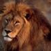 Verrückte Tierwelt - Tierische Tabus