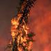 Die Wälder des Nordens