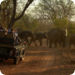 Safari - eine Spurensuche