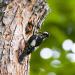 Gefiederte Nachbarn - die bunte Welt der Gartenvögel