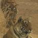 Fight Club der Tiere - Könige des Tierreichs